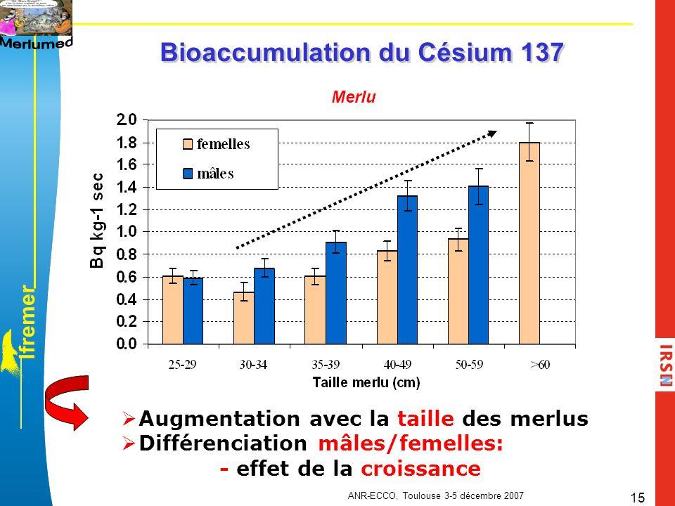 l f r e m e r ANR-ECCO, Toulouse 3-5 décembre 2007 15 Bioaccumulation du Césium 137 Merlu Augmentation avec la taille des merlus Différenciation mâles