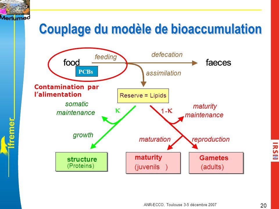 l f r e m e r ANR-ECCO, Toulouse 3-5 décembre 2007 20 Couplage du modèle de bioaccumulation Contamination par lalimentation PCBs Reserve = Lipids stru