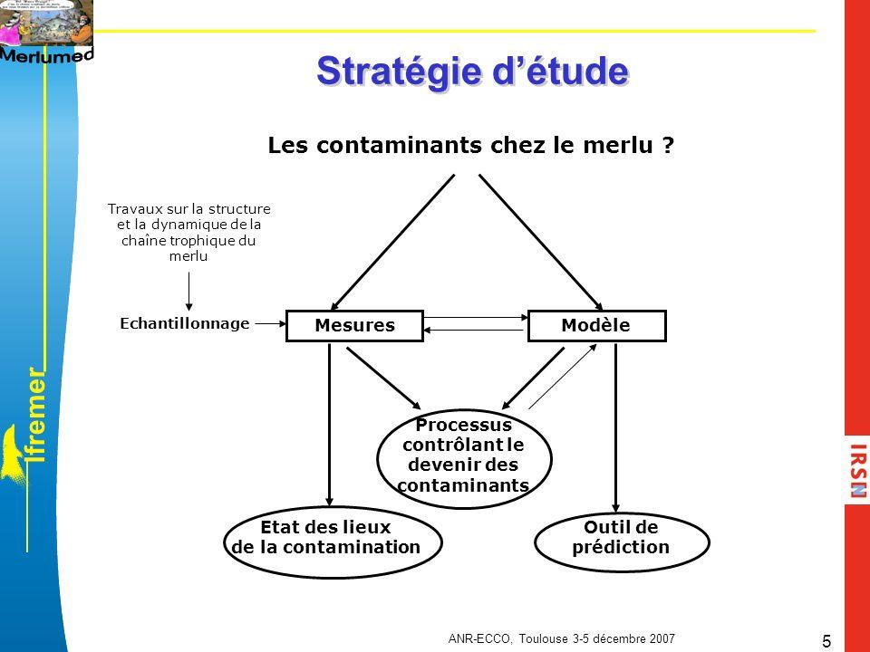 l f r e m e r ANR-ECCO, Toulouse 3-5 décembre 2007 5 Stratégie détude Les contaminants chez le merlu ? MesuresModèle Echantillonnage Travaux sur la st