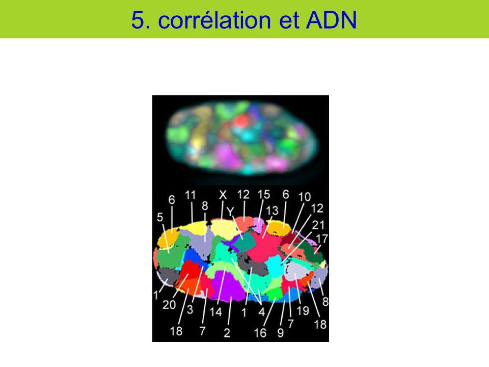5. corrélation et ADN