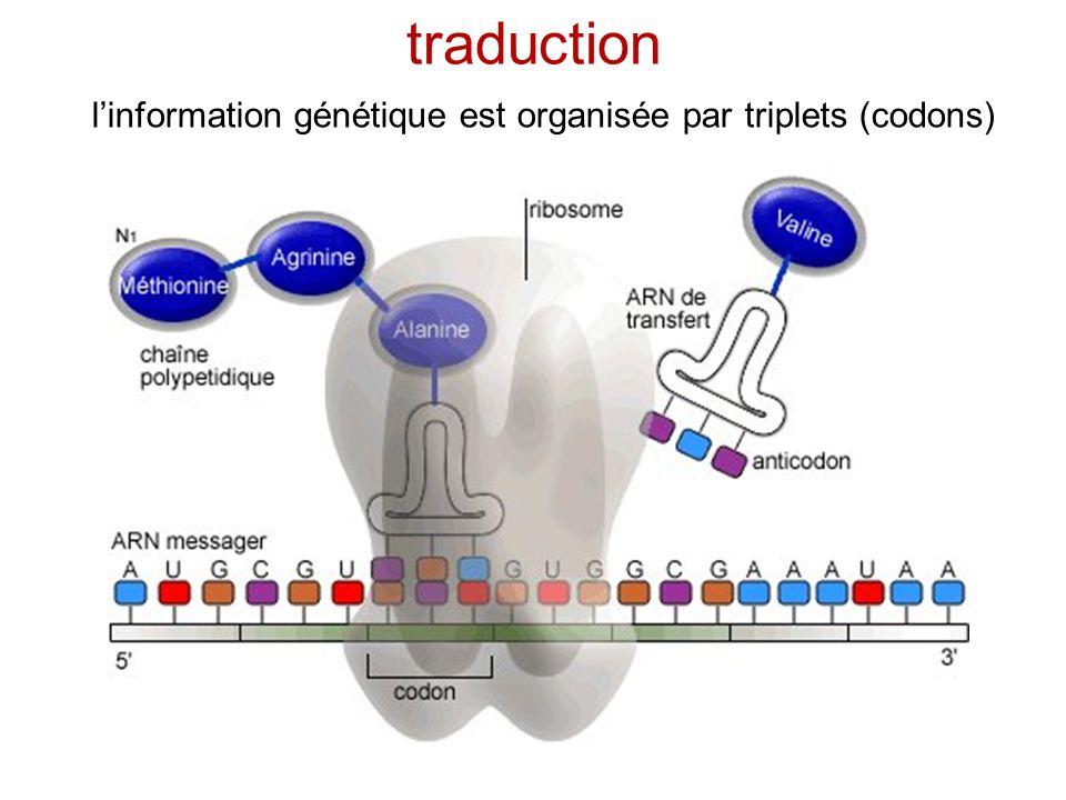 un rôle pour les séquences non codantes les séquences non codantes montrent toujours une corrélation à longue portée lADN « poubelle » participe à létablissement dun arrangement fonctionnel de lADN dans le noyau/la cellule .