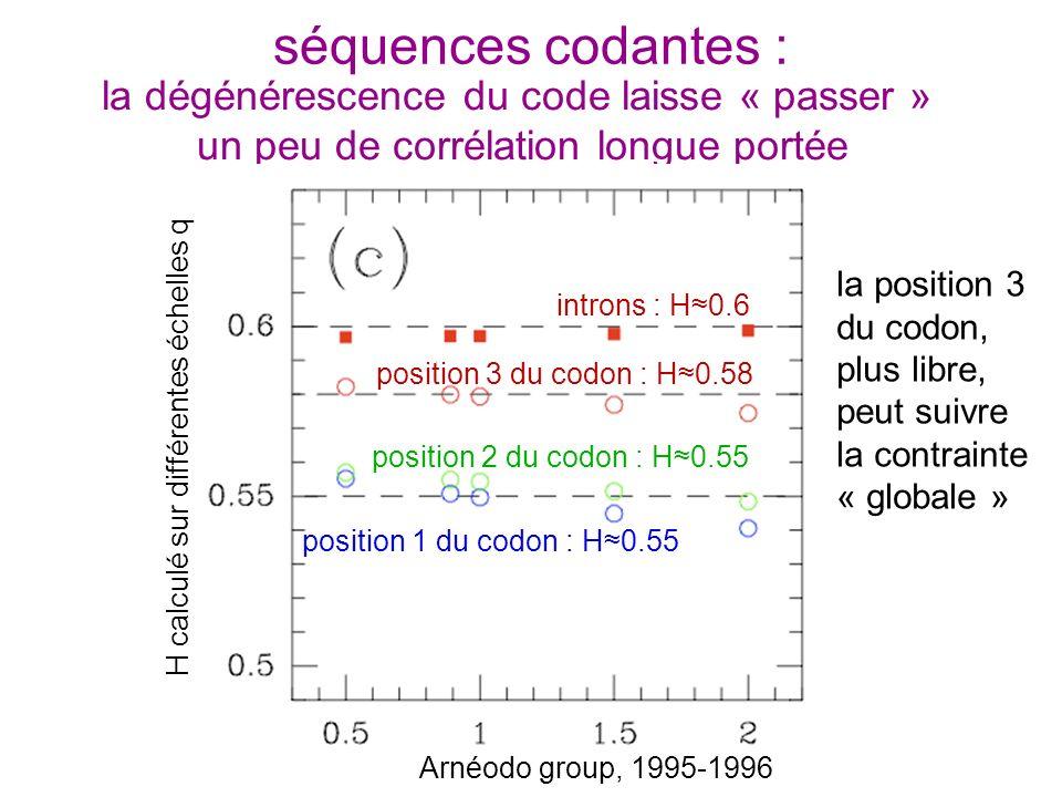dégénérescence sur la troisième lettre du codon séquences codantes : la dégénérescence du code laisse « passer » un peu de corrélation longue portée H