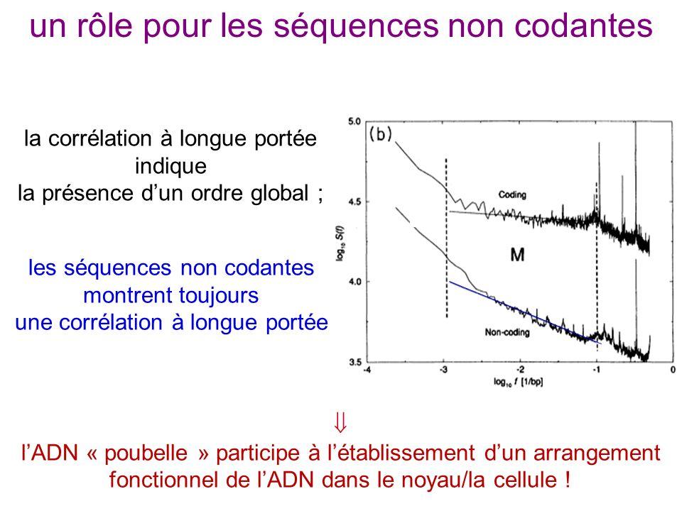un rôle pour les séquences non codantes les séquences non codantes montrent toujours une corrélation à longue portée lADN « poubelle » participe à lét