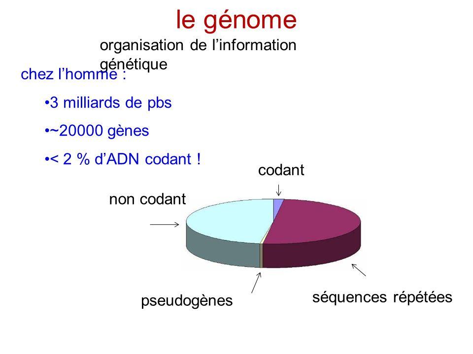 le génome organisation de linformation génétique codant séquences répétées non codant pseudogènes chez lhomme : 3 milliards de pbs ~20000 gènes < 2 %