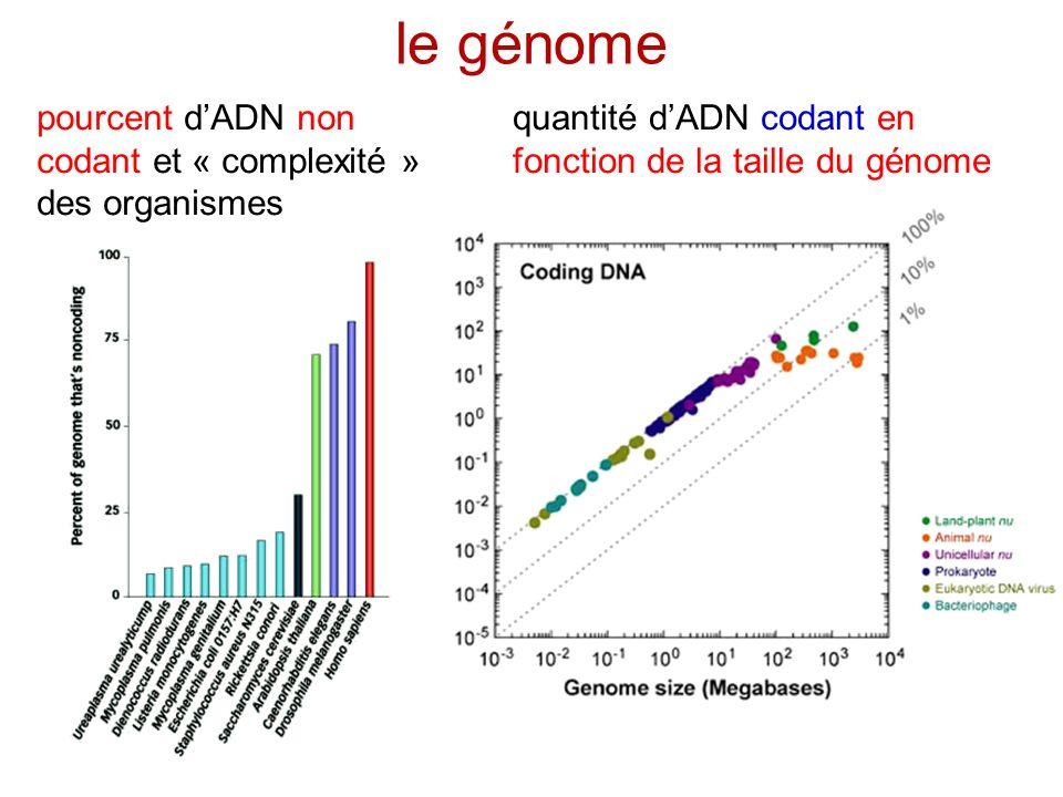 ADN codant et non codant ADN « poubelle » exons introns pourquoi autant dADN non codant .