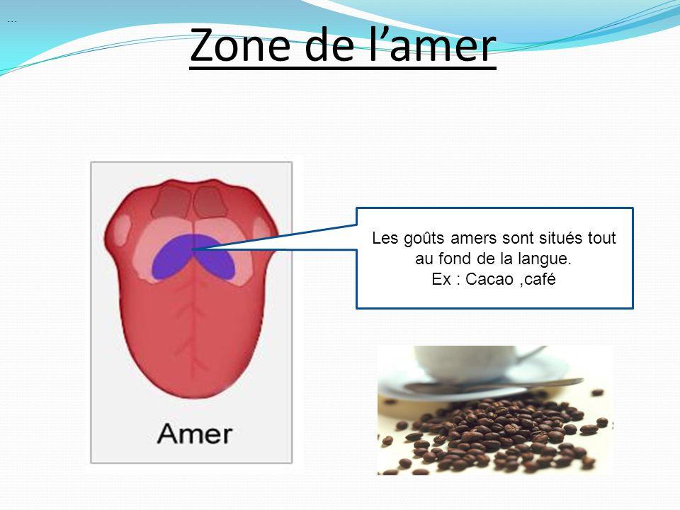 Zone de lamer Les goûts amers sont situés tout au fond de la langue. Ex : Cacao,café...