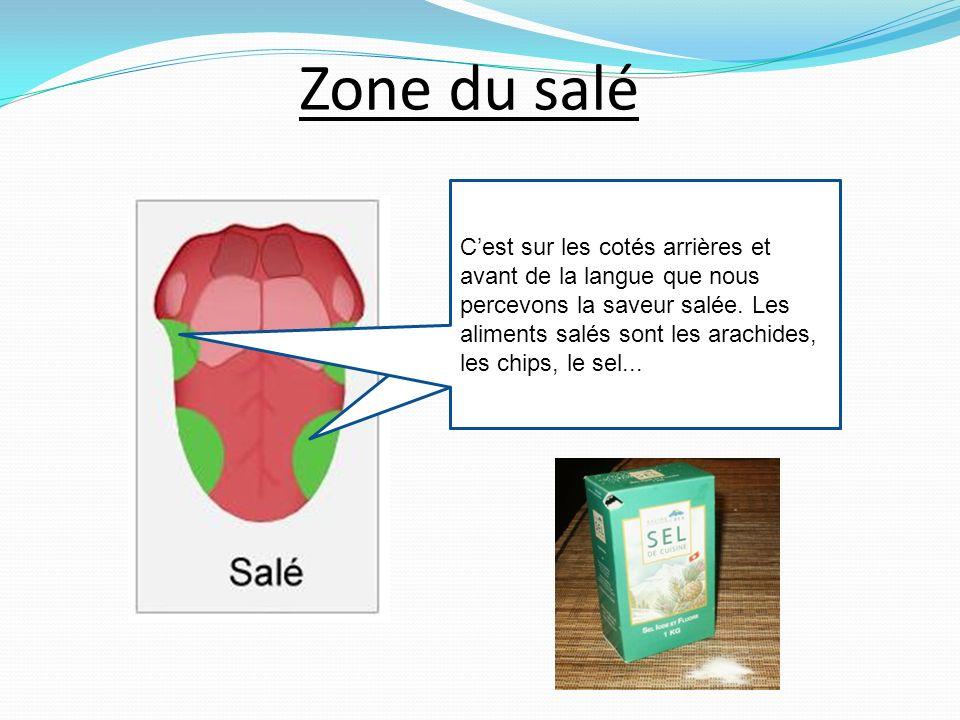 Zone du salé Cest sur les cotés arrières et avant de la langue que nous percevons la saveur salée.