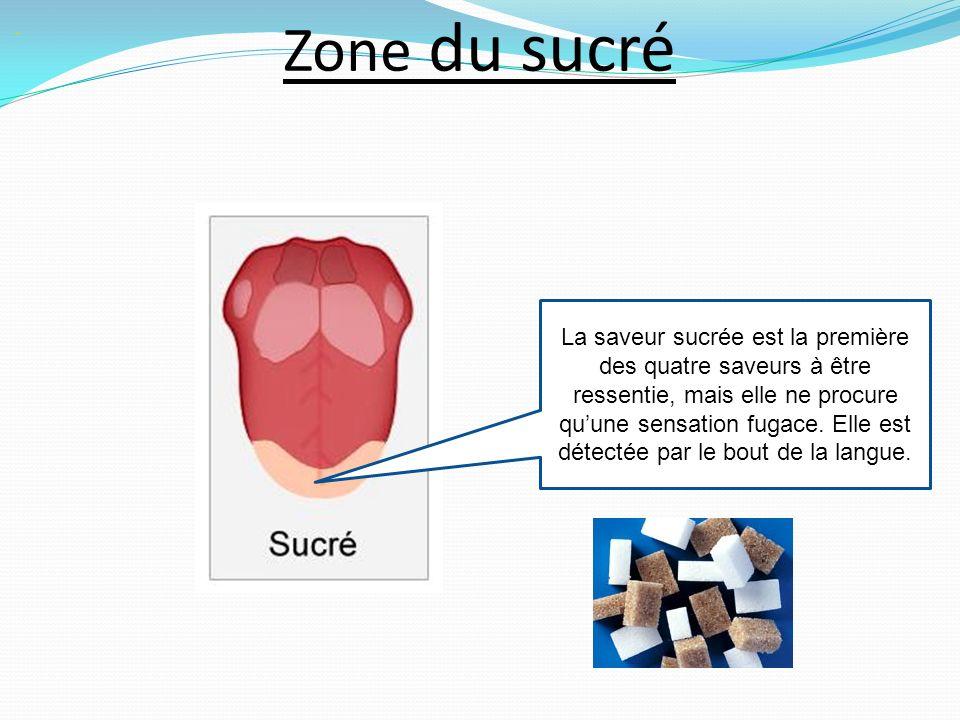 Zone du sucré La saveur sucrée est la première des quatre saveurs à être ressentie, mais elle ne procure quune sensation fugace.