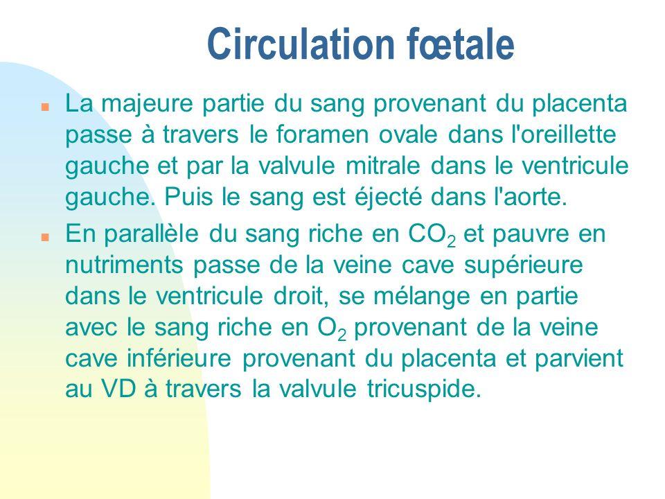Circulation fœtale n La majeure partie du sang provenant du placenta passe à travers le foramen ovale dans l'oreillette gauche et par la valvule mitra