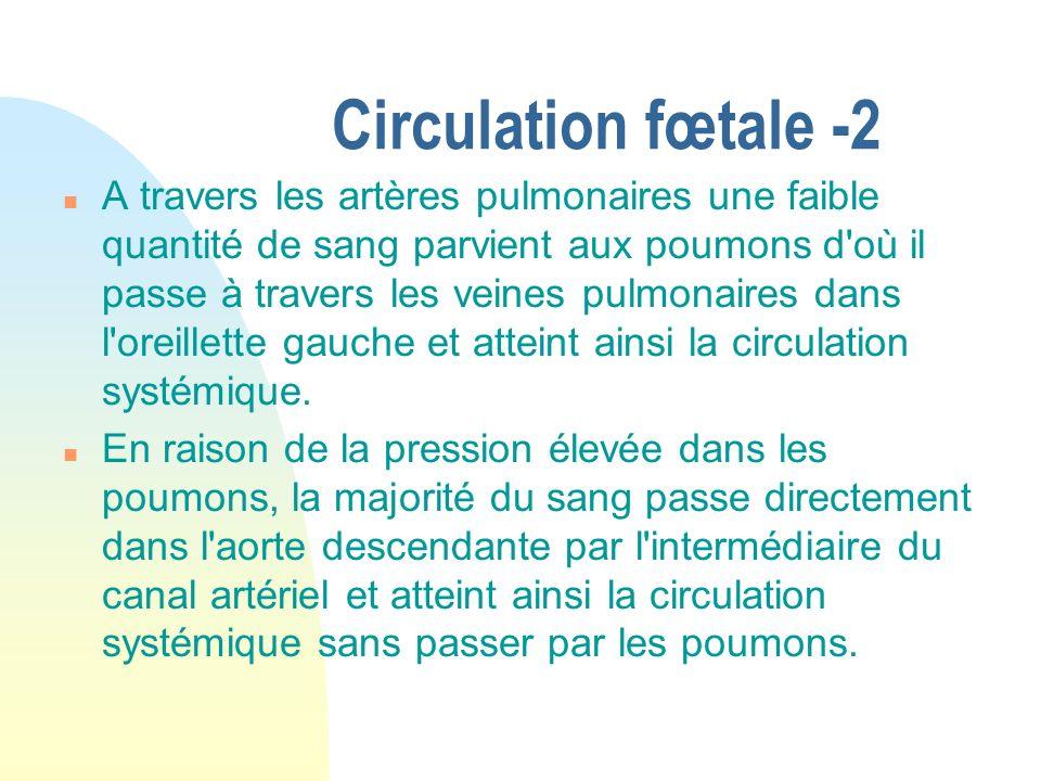 Circulation fœtale -2 n A travers les artères pulmonaires une faible quantité de sang parvient aux poumons d'où il passe à travers les veines pulmonai