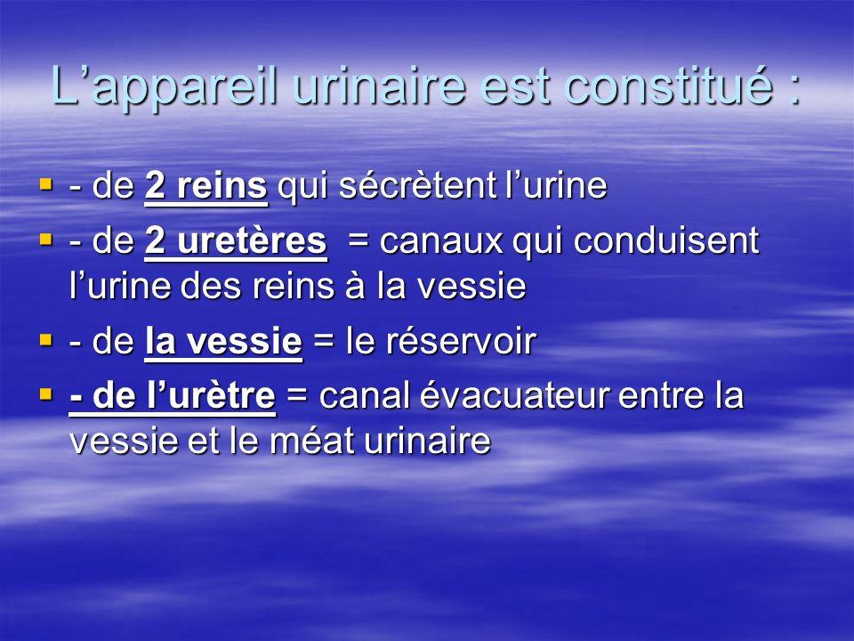 Lappareil urinaire est constitué : - de 2 reins qui sécrètent lurine - de 2 reins qui sécrètent lurine - de 2 uretères = canaux qui conduisent lurine
