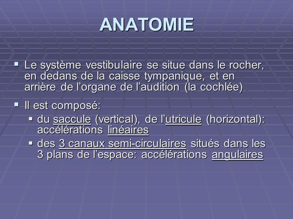 ANATOMIE Le système vestibulaire se situe dans le rocher, en dedans de la caisse tympanique, et en arrière de lorgane de laudition (la cochlée) Le sys