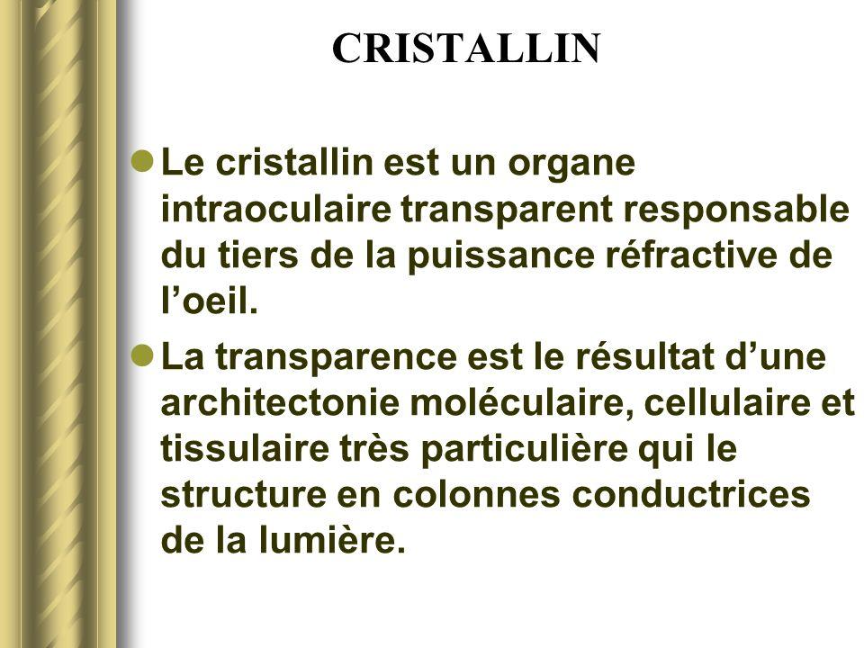 CRISTALLIN Nucleus Cortex Capsule