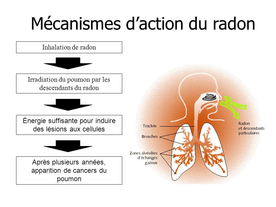 Mécanismes daction du radon Inhalation de radon Irradiation du poumon par les descendants du radon Énergie suffisante pour induire des lésions aux cel