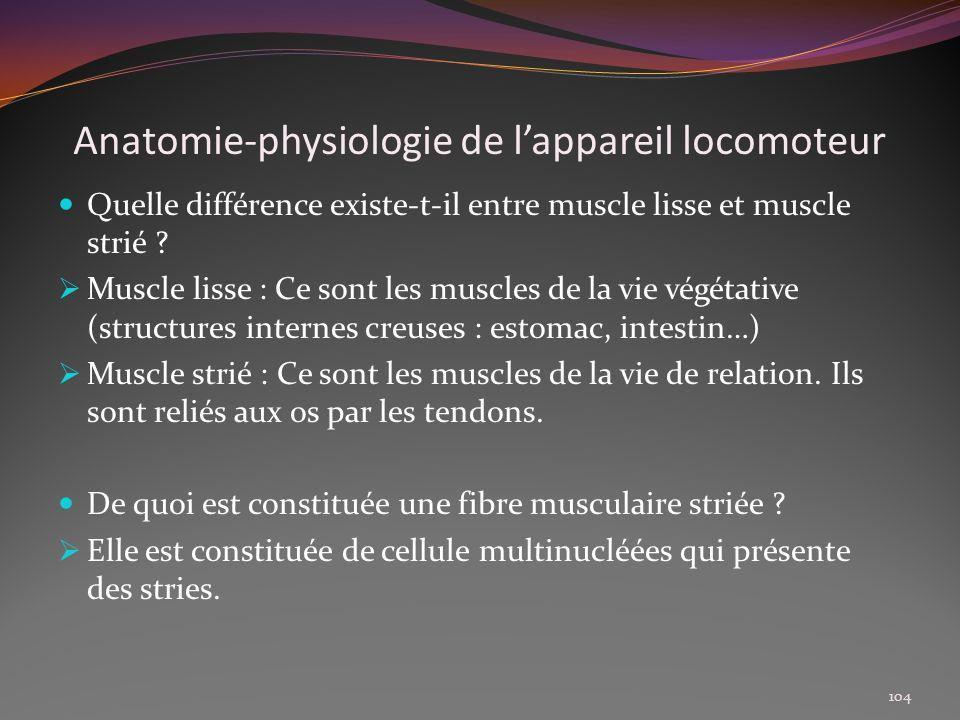 Anatomie-physiologie de lappareil locomoteur Quelle différence existe-t-il entre muscle lisse et muscle strié ? Muscle lisse : Ce sont les muscles de