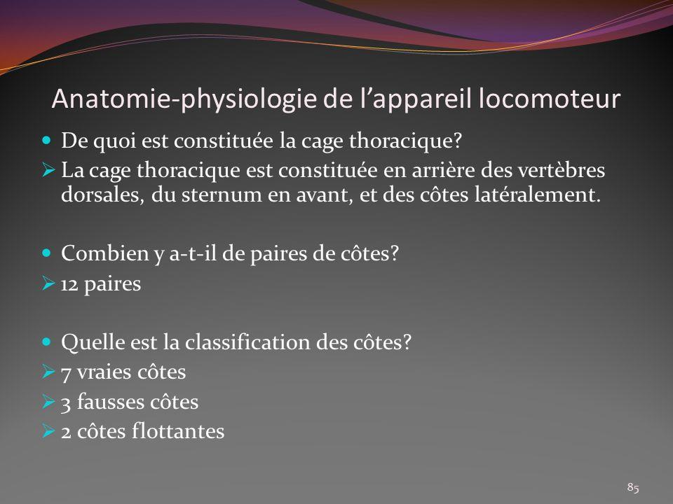 Anatomie-physiologie de lappareil locomoteur De quoi est constituée la cage thoracique? La cage thoracique est constituée en arrière des vertèbres dor