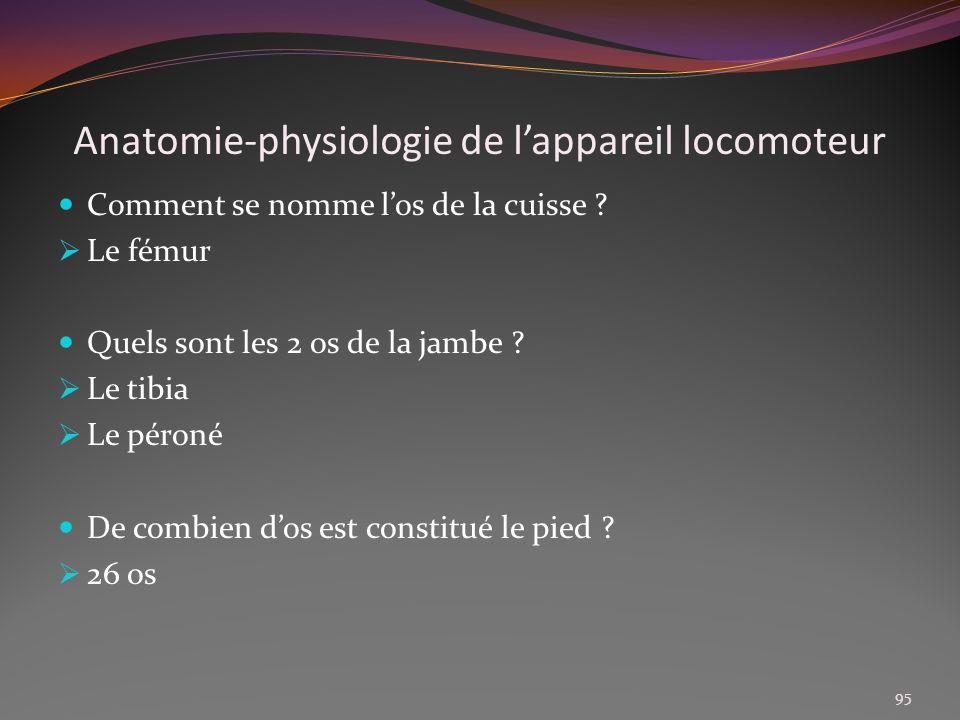 Anatomie-physiologie de lappareil locomoteur Comment se nomme los de la cuisse ? Le fémur Quels sont les 2 os de la jambe ? Le tibia Le péroné De comb