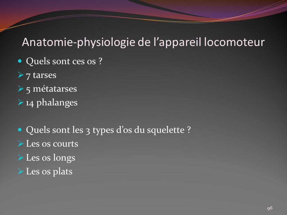 Anatomie-physiologie de lappareil locomoteur Quels sont ces os ? 7 tarses 5 métatarses 14 phalanges Quels sont les 3 types dos du squelette ? Les os c