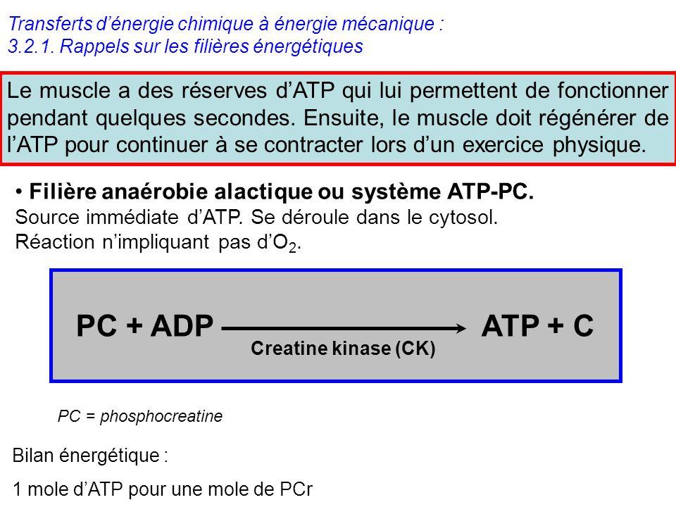 Transferts dénergie chimique à énergie mécanique : 3.2.1. Rappels sur les filières énergétiques Le muscle a des réserves dATP qui lui permettent de fo