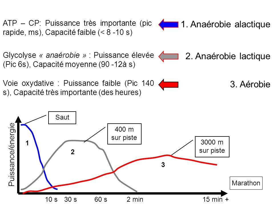 10 s30 s60 s2 min15 min + 1. Anaérobie alactique 2. Anaérobie lactique 3. Aérobie 1 2 3 ATP – CP: Puissance très importante (pic rapide, ms), Capacité