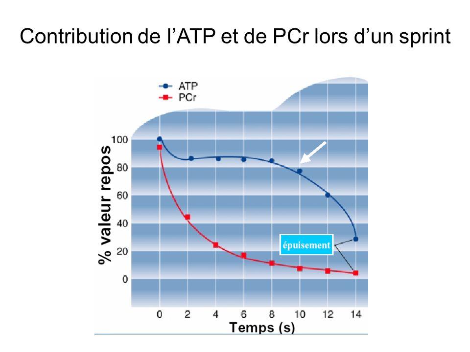 Contribution de lATP et de PCr lors dun sprint