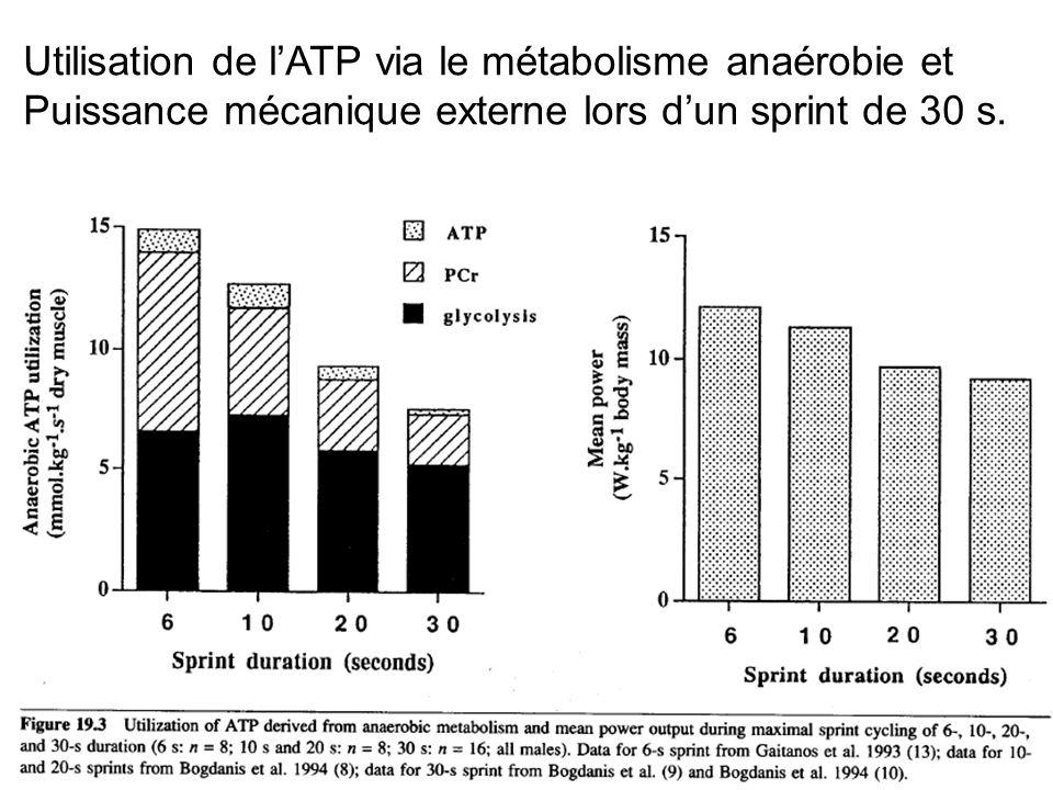 Utilisation de lATP via le métabolisme anaérobie et Puissance mécanique externe lors dun sprint de 30 s.