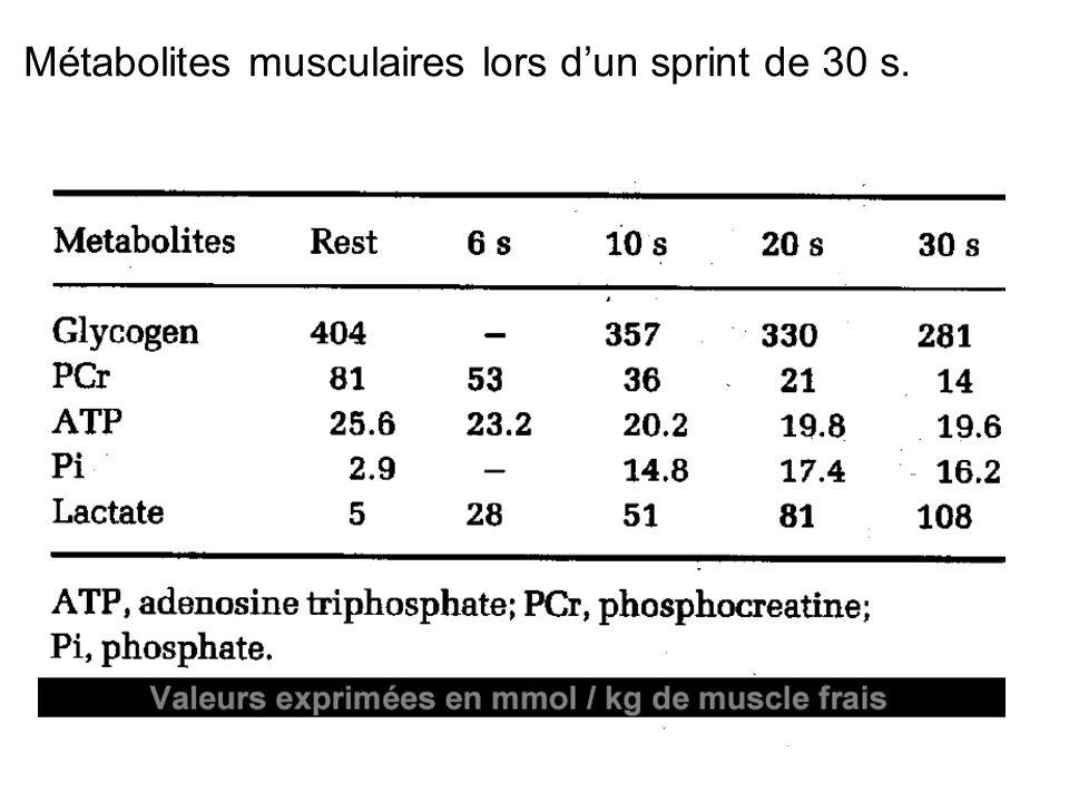 Métabolites musculaires lors dun sprint de 30 s.