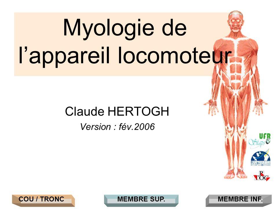 Claude HERTOGH Version : fév.2006 Myologie de lappareil locomoteur COU / TRONCMEMBRE INF.MEMBRE SUP.