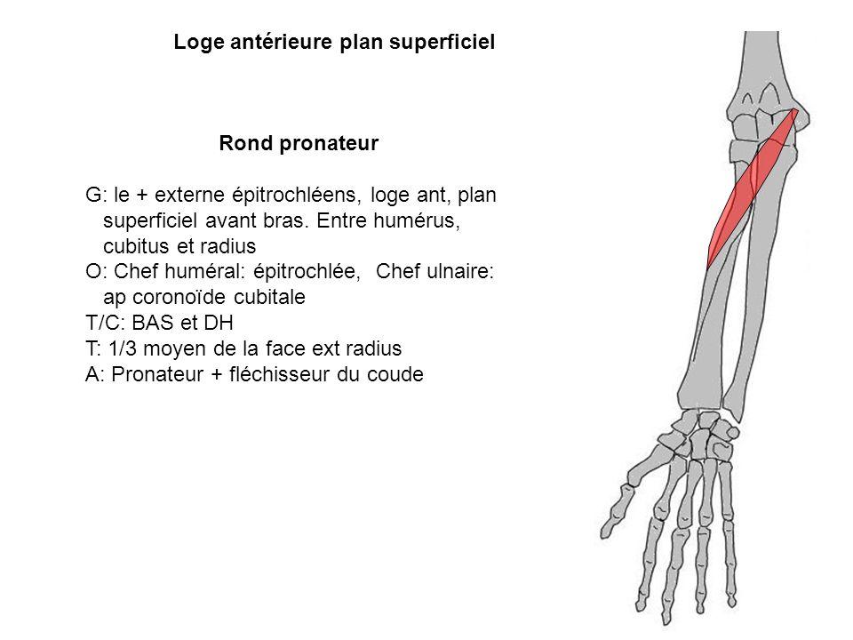 Rond pronateur G: le + externe épitrochléens, loge ant, plan superficiel avant bras. Entre humérus, cubitus et radius O: Chef huméral: épitrochlée, Ch