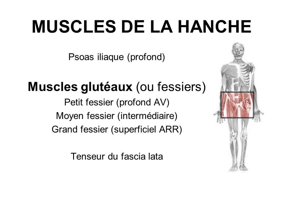 MUSCLES DE LA HANCHE Psoas iliaque (profond) Muscles glutéaux (ou fessiers) Petit fessier (profond AV) Moyen fessier (intermédiaire) Grand fessier (su