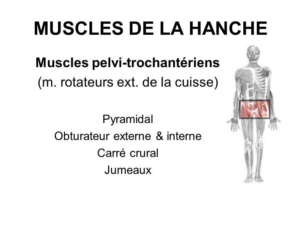 MUSCLES DE LA HANCHE Muscles pelvi-trochantériens (m. rotateurs ext. de la cuisse) Pyramidal Obturateur externe & interne Carré crural Jumeaux