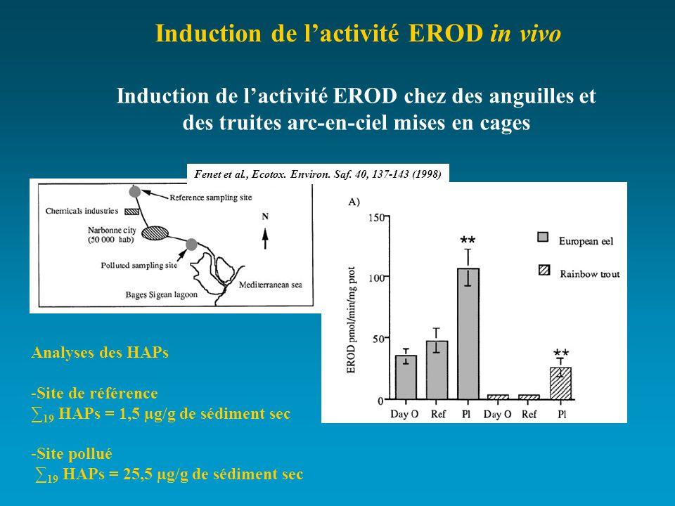 Induction de lactivité EROD chez des anguilles et des truites arc-en-ciel mises en cages Analyses des HAPs -Site de référence 19 HAPs = 1,5 µg/g de sé
