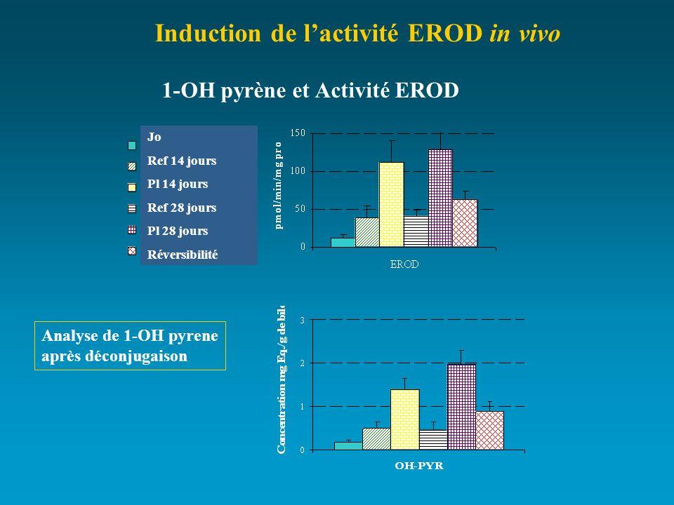 1-OH pyrène et Activité EROD Analyse de 1-OH pyrene après déconjugaison Induction de lactivité EROD in vivo Jo Ref 14 jours Pl 14 jours Ref 28 jours P