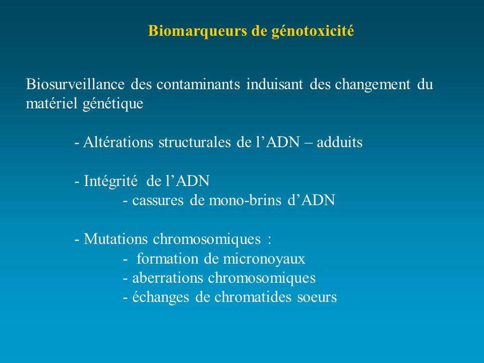 Biomarqueurs de génotoxicité Biosurveillance des contaminants induisant des changement du matériel génétique - Altérations structurales de lADN – addu