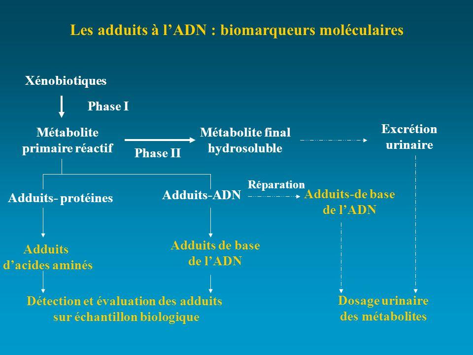 Les adduits à lADN : biomarqueurs moléculaires Xénobiotiques Métabolite primaire réactif Phase I Métabolite final hydrosoluble Phase II Excrétion urin