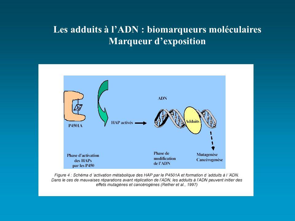 Les adduits à lADN : biomarqueurs moléculaires Marqueur dexposition