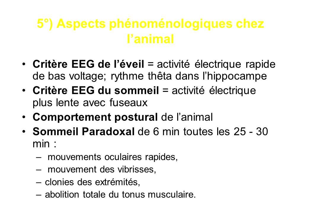 5°) Aspects phénoménologiques chez lanimal Critère EEG de léveil = activité électrique rapide de bas voltage; rythme thêta dans lhippocampe Critère EE
