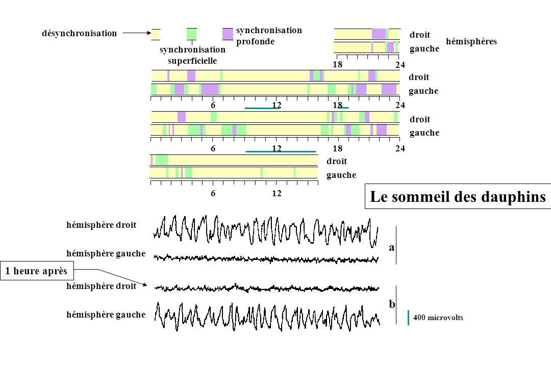 désynchronisation synchronisation superficielle synchronisation profonde hémisphères droit gauche droit gauche droit gauche droit gauche 18 24 1824612