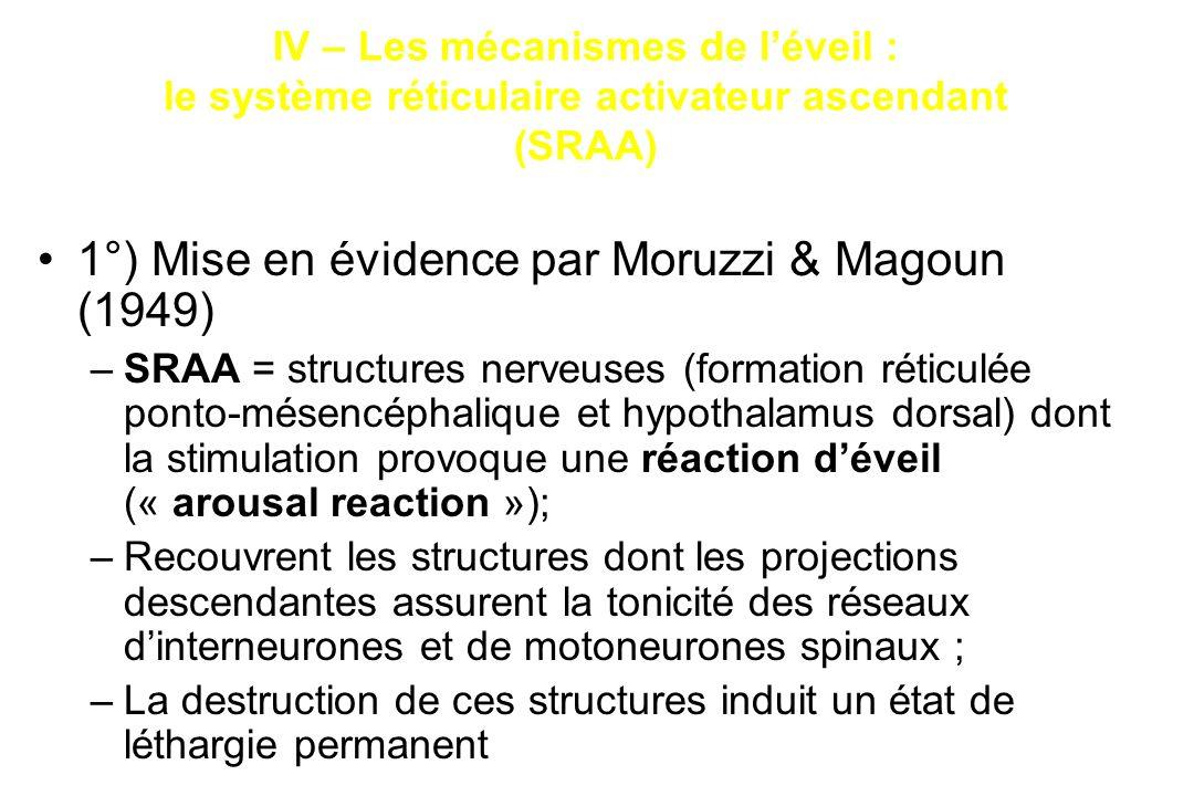 1°) Mise en évidence par Moruzzi & Magoun (1949) –SRAA = structures nerveuses (formation réticulée ponto-mésencéphalique et hypothalamus dorsal) dont