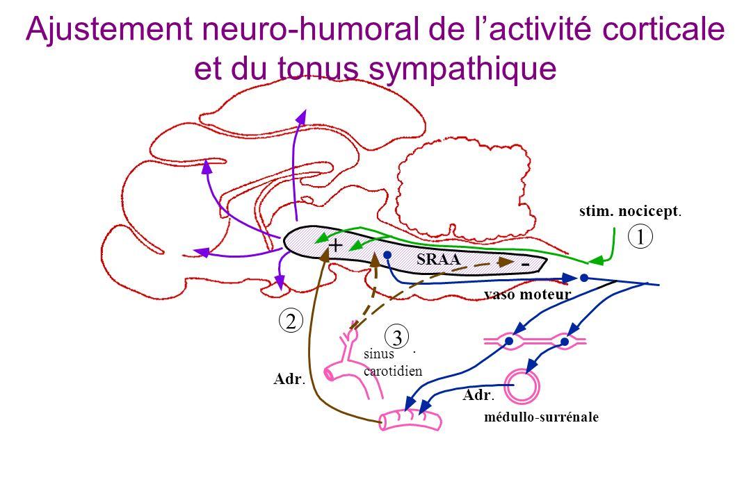 sinus carotidien SRAA stim. nocicept. 1 3 médullo-surrénale 2 Adr.. vaso moteur Ajustement neuro-humoral de lactivité corticale et du tonus sympathiqu