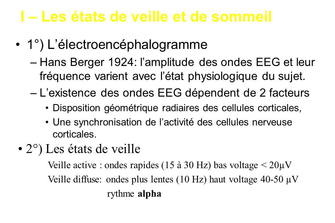 I – Les états de veille et de sommeil 1°) Lélectroencéphalogramme –Hans Berger 1924: lamplitude des ondes EEG et leur fréquence varient avec létat phy