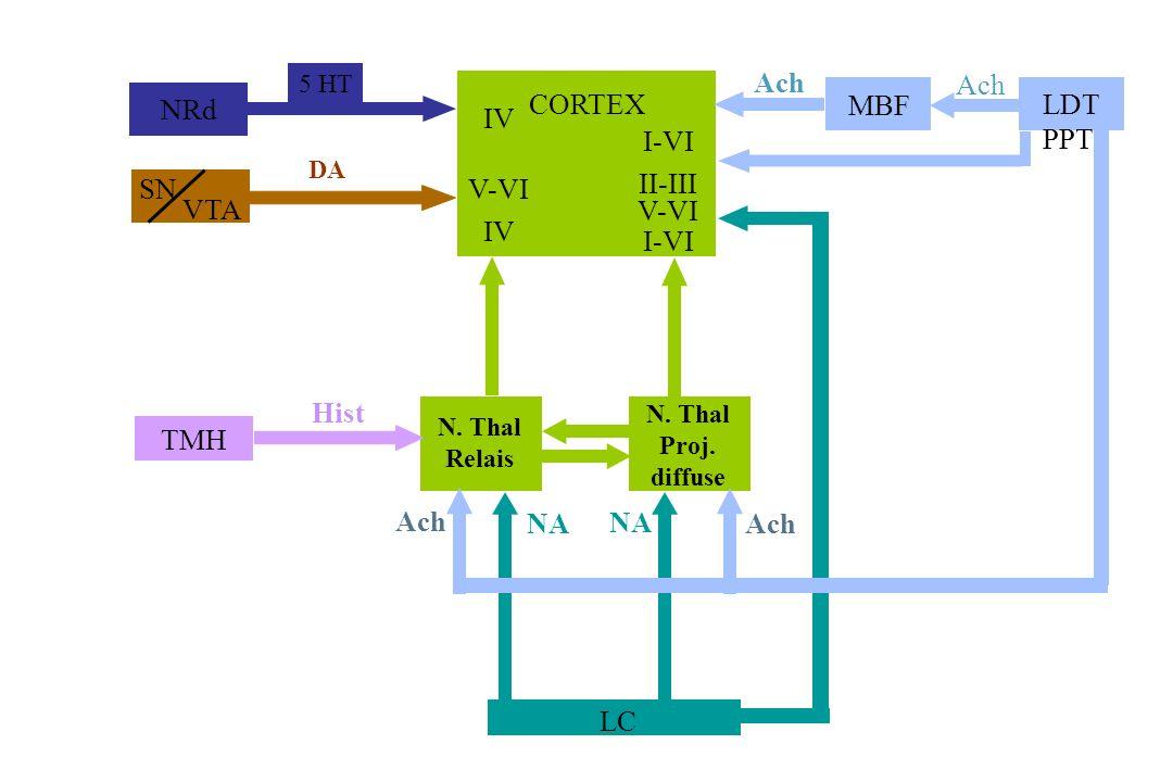 NRd 5 HT SN VTA DA CORTEX IV V-VI IV I-VI II-III V-VI I-VI LC NA N. Thal Relais N. Thal Proj. diffuse Ach MBF LDT PPT Ach TMH Hist