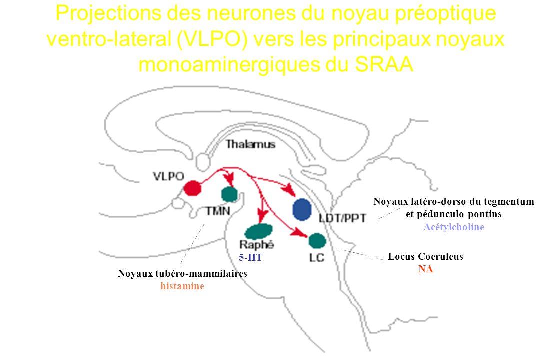 Projections des neurones du noyau préoptique ventro-lateral (VLPO) vers les principaux noyaux monoaminergiques du SRAA Noyaux latéro-dorso du tegmentu