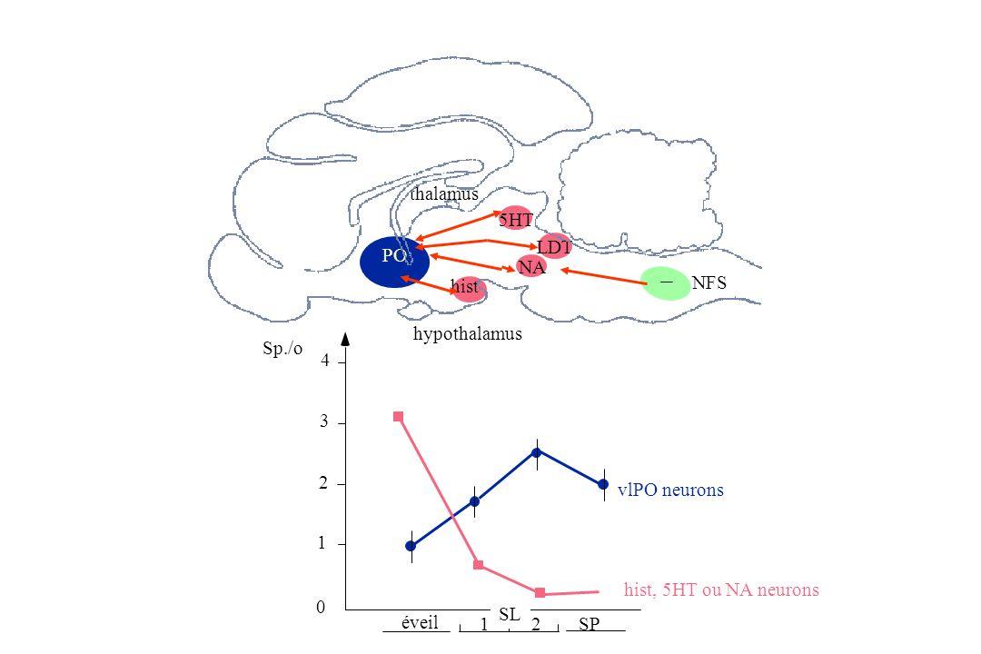 5HT NFS NA hypothalamus thalamus PO hist 0 1 2 3 4 Sp./o vlPO neurons hist, 5HT ou NA neurons éveil SL SP12 LDT