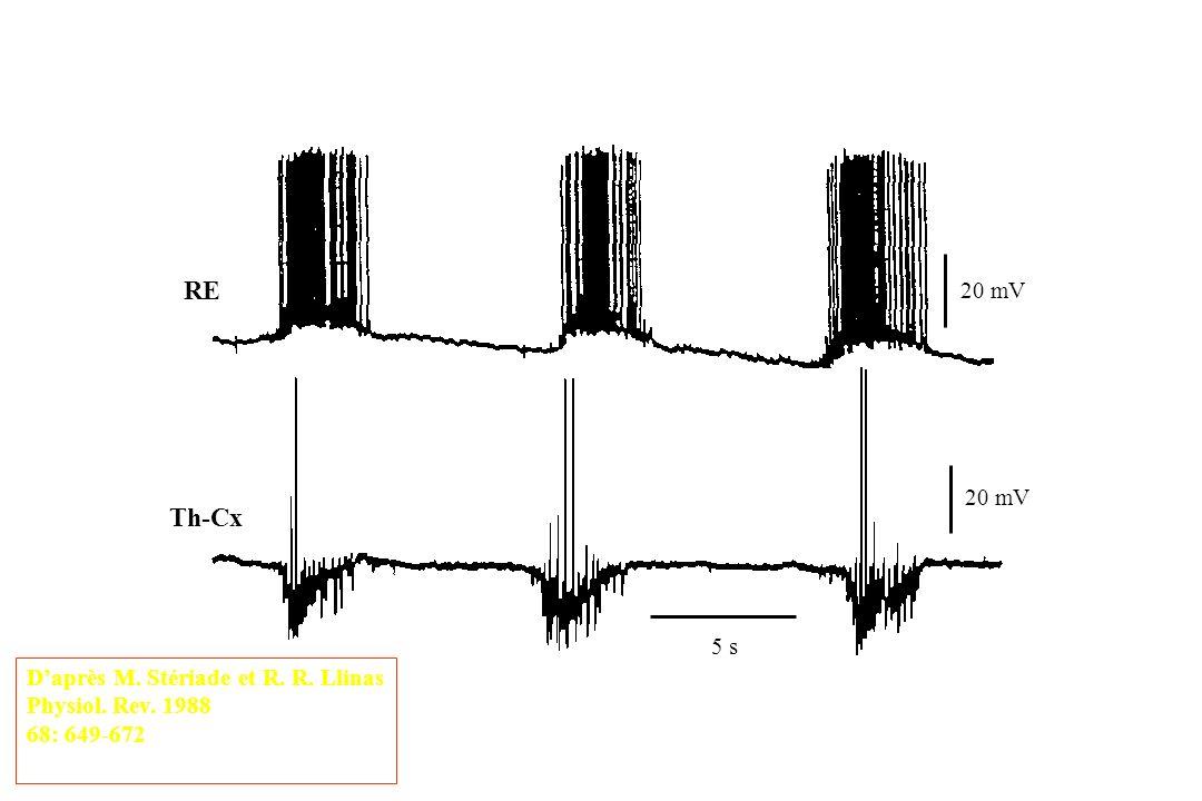 RE Th-Cx 5 s 20 mV Daprès M. Stériade et R. R. Llinas Physiol. Rev. 1988 68: 649-672