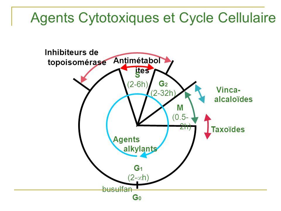 Antimétabol ites S (2-6h) G 2 (2-32h) M (0.5- 2h) Agents alkylants G 1 (2- h) G0G0 Vinca- alcaloïdes Taxoïdes Agents Cytotoxiques et Cycle Cellulaire