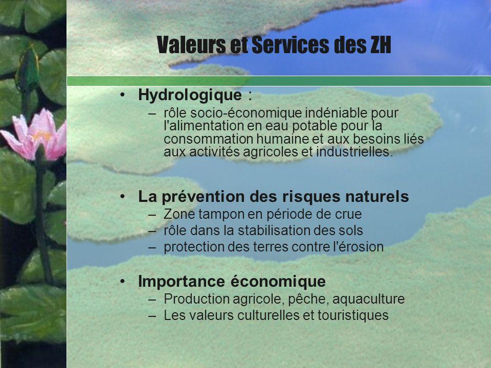 Hydrologique : –rôle socio-économique indéniable pour l'alimentation en eau potable pour la consommation humaine et aux besoins liés aux activités agr