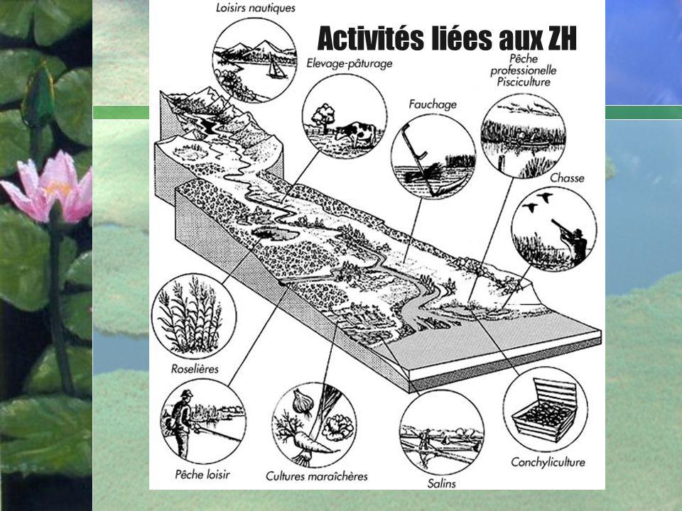 Bullet Point Slide Marais Agricoles Aménages Activités liées aux ZH
