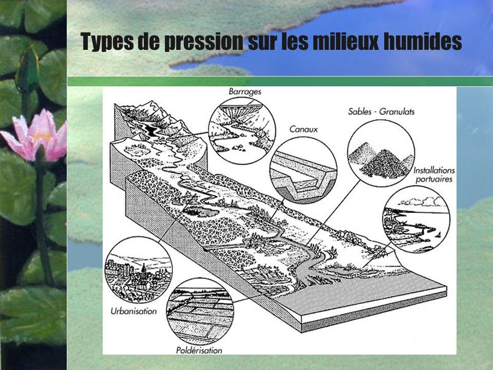 Bullet Point Slide Types de pression sur les milieux humides