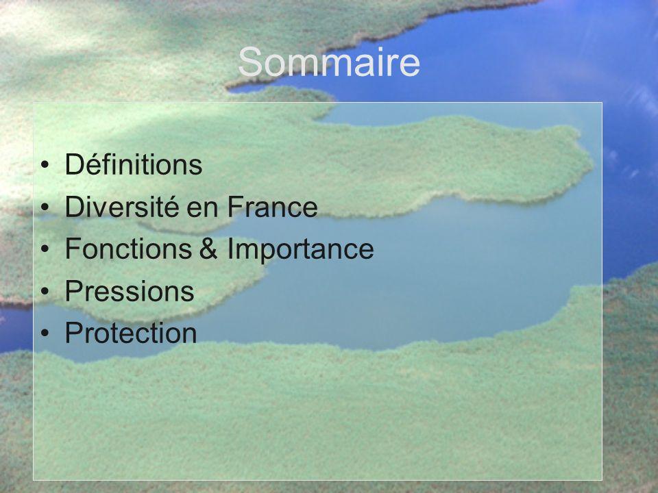 Sommaire Définitions Diversité en France Fonctions & Importance Pressions Protection